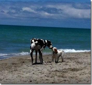Brohard Beach Dog Beach
