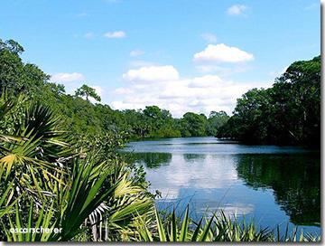 Oscar Scherer Park Osprey, FL
